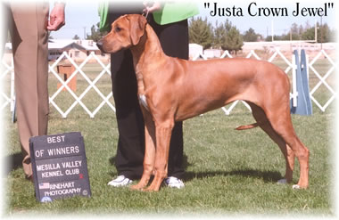 Our RHodesian Ridgeback Puppy Jewel at a show in New Mexico - She won against all the other Ridgebacks at the show.